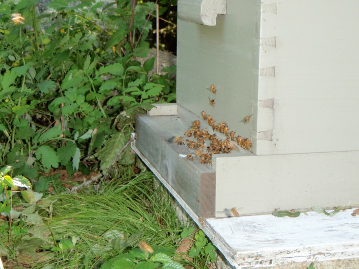 Bees are back to work