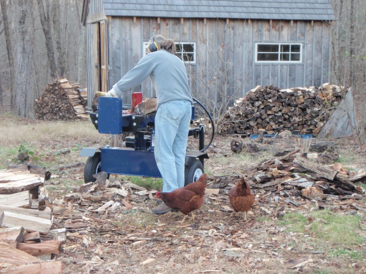 Chickens splitting wood