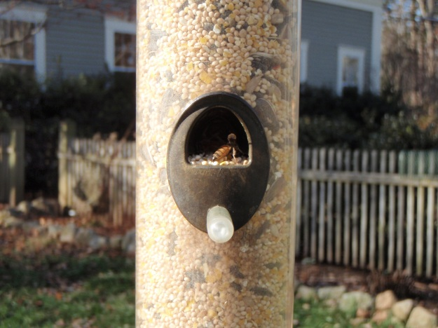Bees in feeder