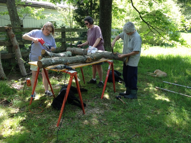 Inoculating the logs