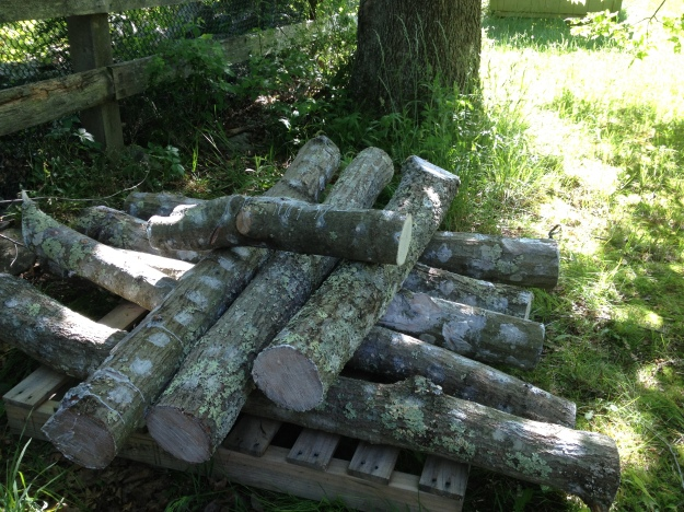 Inoculated logs