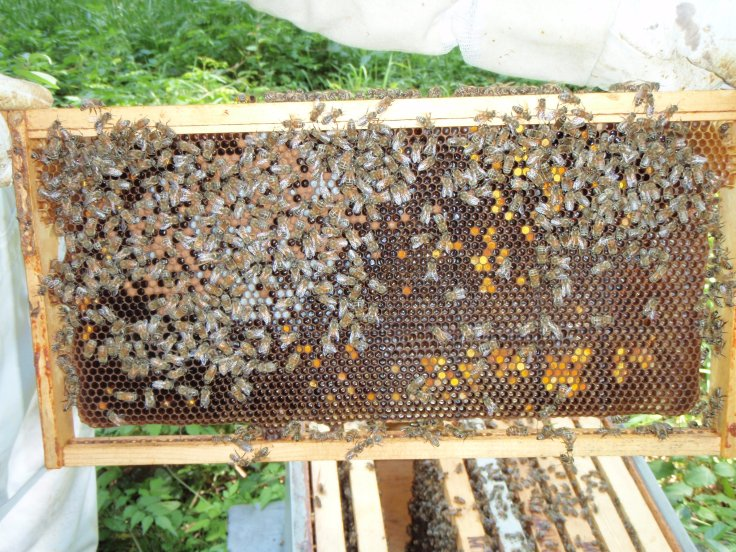 Little brood in new hive